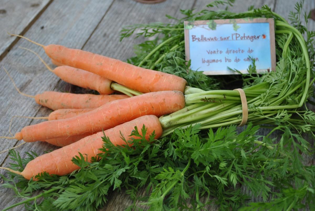 Parmentier de carottes